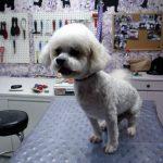 458255666_f2ae955b5d_b_grooming-pet